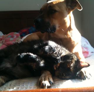 Animal Carers and Careers: Jan Rosen at Washington Animal Rescue League